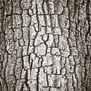 Cottonwood Bark 1 Print by Marilyn Hunt