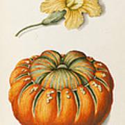 Courgette And A Pumpkin Print by Joseph Jacob Plenck