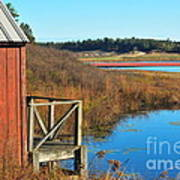 Cranberry Harvest  Print by Catherine Reusch  Daley