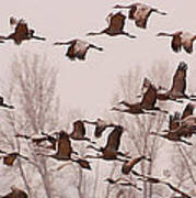 Cranes Across The Sky Print by Don Schwartz