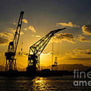 Cranes In The Sunset Print by David Hill
