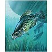 Crappie And Boat Print by JQ Licensing