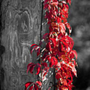 Creeper On Pole Desaturated Print by Teresa Mucha