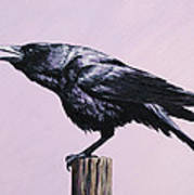 Crow - Sounding Off Print by Crista Forest