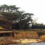 Cypress Trees On 17 Mile Drive Print by Barbara Snyder