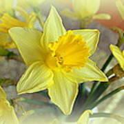 Daffodil Print by Bishopston Fine Art