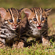 Dazed And Confused Print by Ashley Vincent