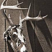 Deer Skull In Sepia Print by Brooke Ryan