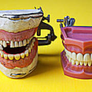 Dental Models Print by Garry Gay