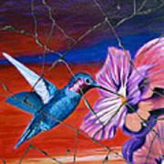 Desert Hummingbird - Study No. 1 Print by Steve Bogdanoff