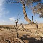Desert Tamarix Trees Print by Dan Yeger