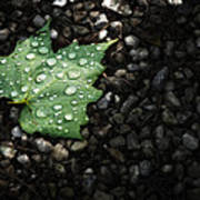 Dew On Leaf Print by Scott Norris