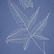 Dictyopteris Barberi Print by Aged Pixel