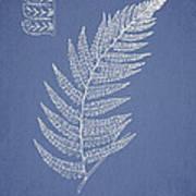Diplazium Griffithii Print by Aged Pixel