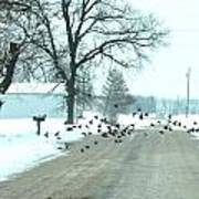 Disturbing The Flock Print by Julie Dant