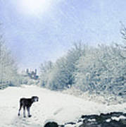 Dog Looking Back Print by Amanda Elwell