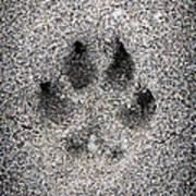 Dog Paw Print In Sand Print by Elena Elisseeva