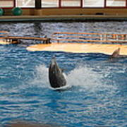 Dolphin Show - National Aquarium In Baltimore Md - 1212102 Print by DC Photographer