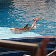 Dolphin Show - National Aquarium In Baltimore Md - 1212104 Print by DC Photographer