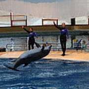 Dolphin Show - National Aquarium In Baltimore Md - 1212139 Print by DC Photographer