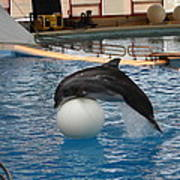Dolphin Show - National Aquarium In Baltimore Md - 1212160 Print by DC Photographer