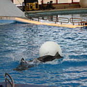 Dolphin Show - National Aquarium In Baltimore Md - 1212164 Print by DC Photographer