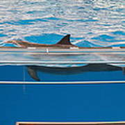 Dolphin Show - National Aquarium In Baltimore Md - 1212173 Print by DC Photographer