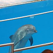 Dolphin Show - National Aquarium In Baltimore Md - 1212193 Print by DC Photographer