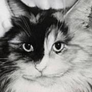 Domestic Cat Print by Natasha Denger