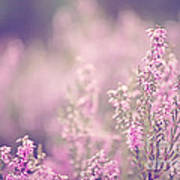 Dreamy Pink Heather Print by Natalie Kinnear