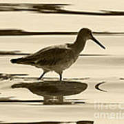Early Morning In The Moss Landing Harbor Picture Of A Willet Print by Artist and Photographer Laura Wrede