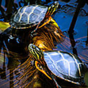 Eastern Painted Turtles Print by Bob Orsillo