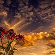 Echinacea Sunset Print by Bob Orsillo