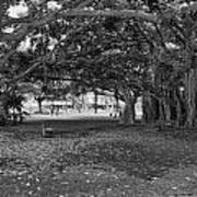 Embraced By Trees Print by Douglas Barnard