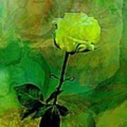 Enduring Yellow Rose Print by Shirley Sirois