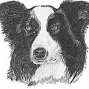 English Border Collie Print by Catherine Roberts