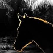 Equine Glow Print by Steven Milner