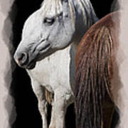 Equine Horse Head And Tail Print by Daniel Hagerman