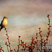 Evening Mocking Bird Print by Darren Fisher