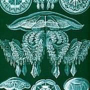 Examples Of Discomedusae Print by Ernst Haeckel
