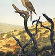 Falcon In The Sunset Print by Stu Shepherd