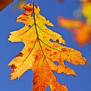 Fall Oak Leaf Print by Elena Elisseeva
