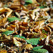 Fallen Leaves Print by Carlos Caetano
