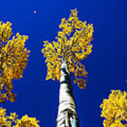 Falling Leaf Print by Chad Dutson