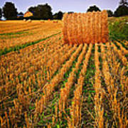 Farm Field With Hay Bales At Sunset In Ontario Print by Elena Elisseeva