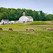 Farm Life Print by Guy Whiteley