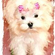 Faux Maltese Bella Print by Margaret Newcomb