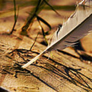 Feather And Sand Print by Raimond Klavins