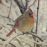 Female Cardinal In The Snow II Print by Sandy Keeton