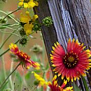 Fenceline Wildflowers Print by Robert Frederick
